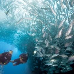 Scuba Diving United Kingdom