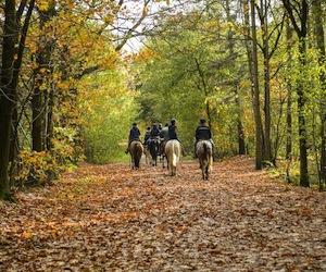 Horse Riding United Kingdom