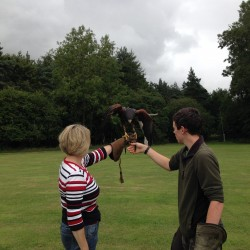 Falconry United Kingdom