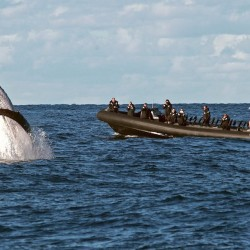 Adrenalin Activities Nelson Bay
