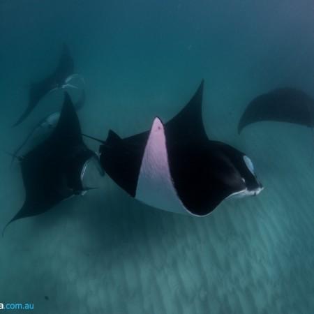 Scuba Diving Ningaloo Reef Dive,