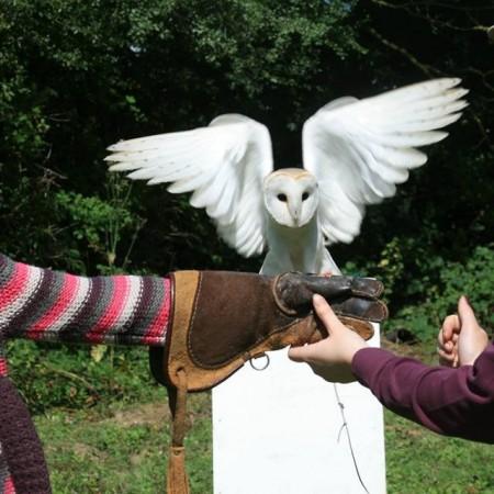 Falconry Dorking, Surrey