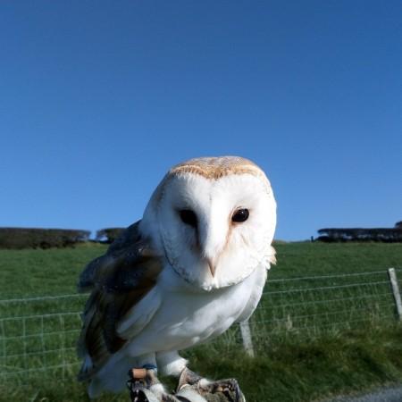 Birds Of Prey Carmarthen, Shropshire